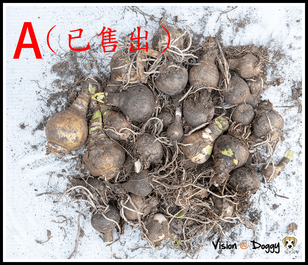 http://pic.hunternet.com.tw/pic/花花/2018-07-10-花花基金-alex-pan/pic-20180710-02.png